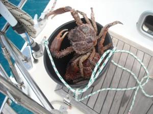 seafood in san blas
